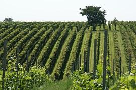vineyard-836200__180